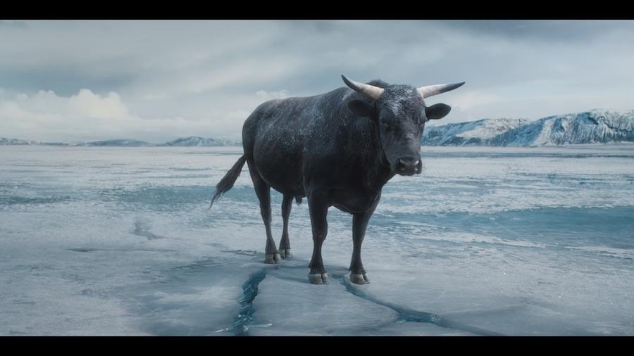 money calm bull campaign