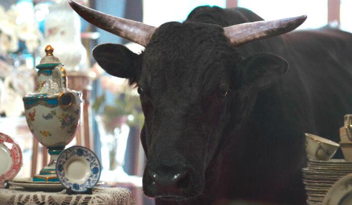 money calm bull