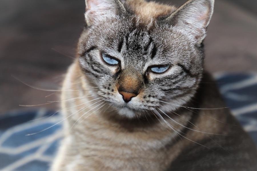 content crunch cat